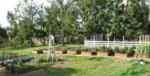 coraltreefarms