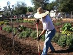 San Pasqual Volunteer Groups