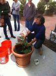 plantinglesson